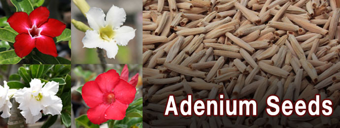 Go to adenium color seed catalog.